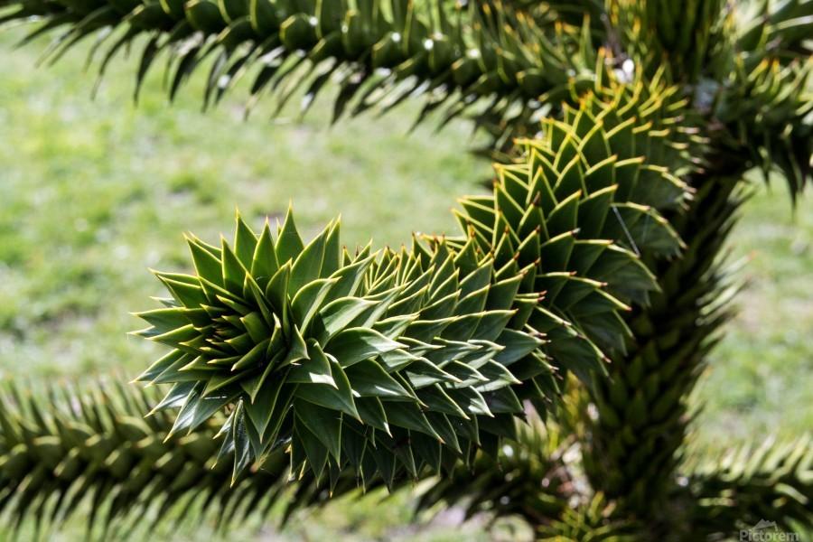 Plant Image  Print