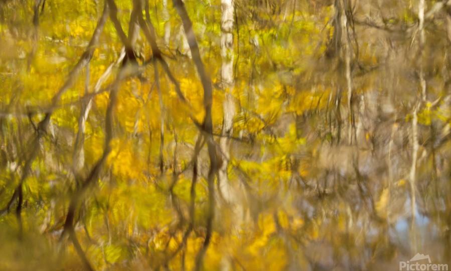 Autumnal swirls reflections  Print