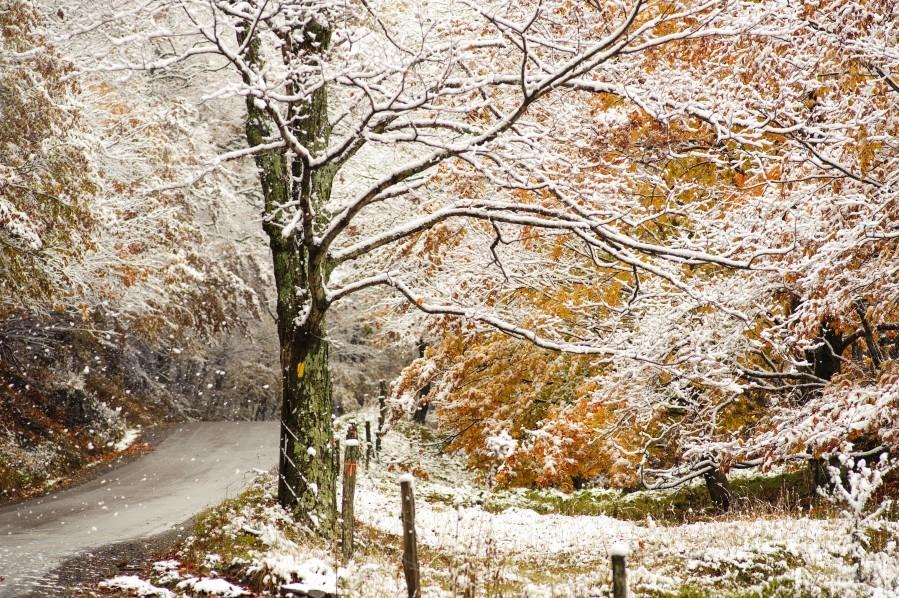 October snow Canaan Valley WVa  Print