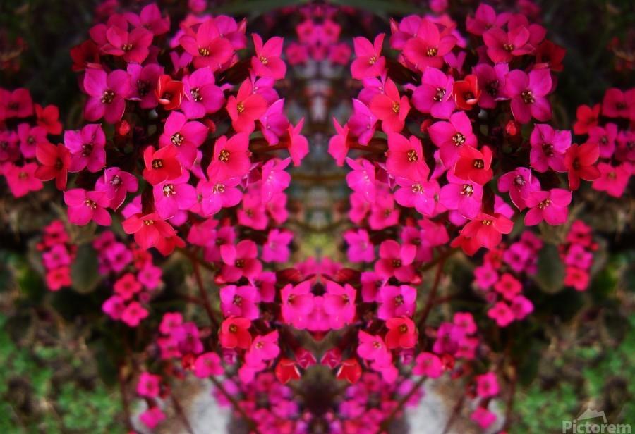 flower29  Print