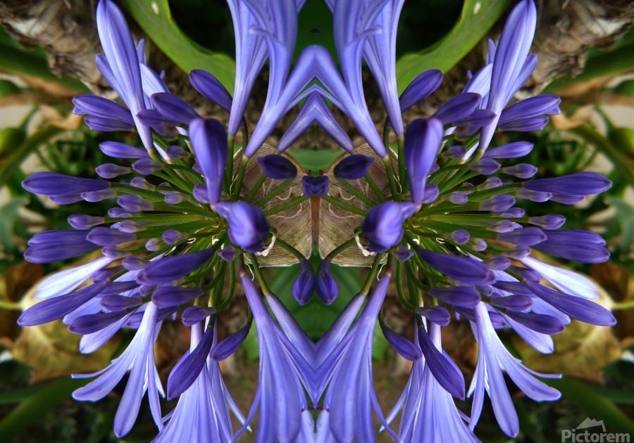 flower3  Print
