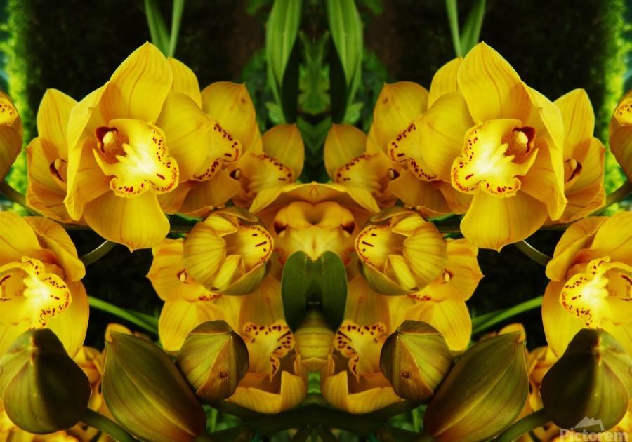 flower65  Print