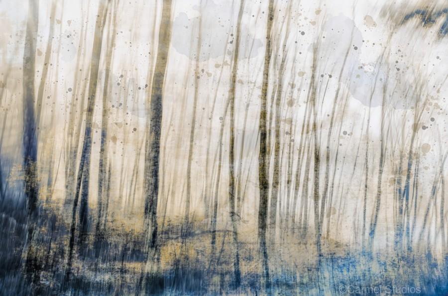 Tree Dreams in Blue  Print