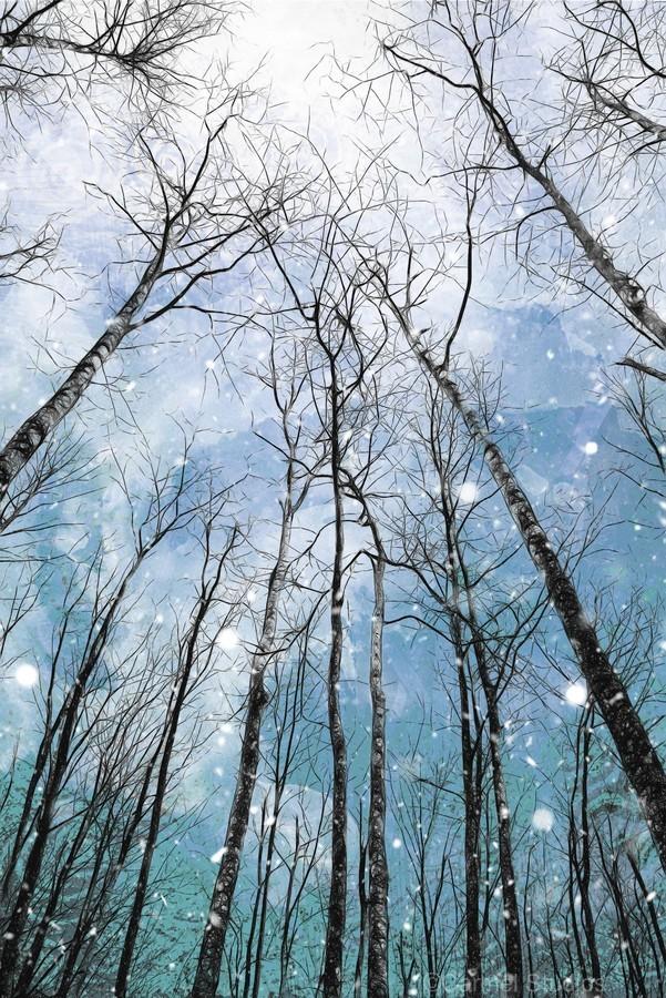 Winter Trees   Print