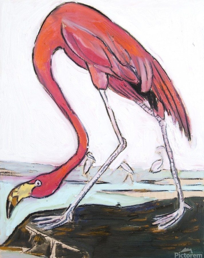 Louisiana Flamingo Study on Wood  Print
