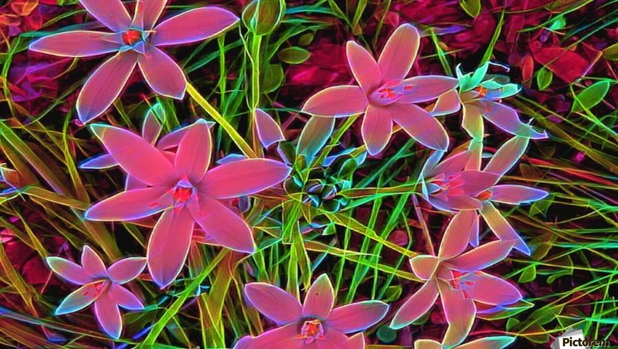 radiantplant  Print