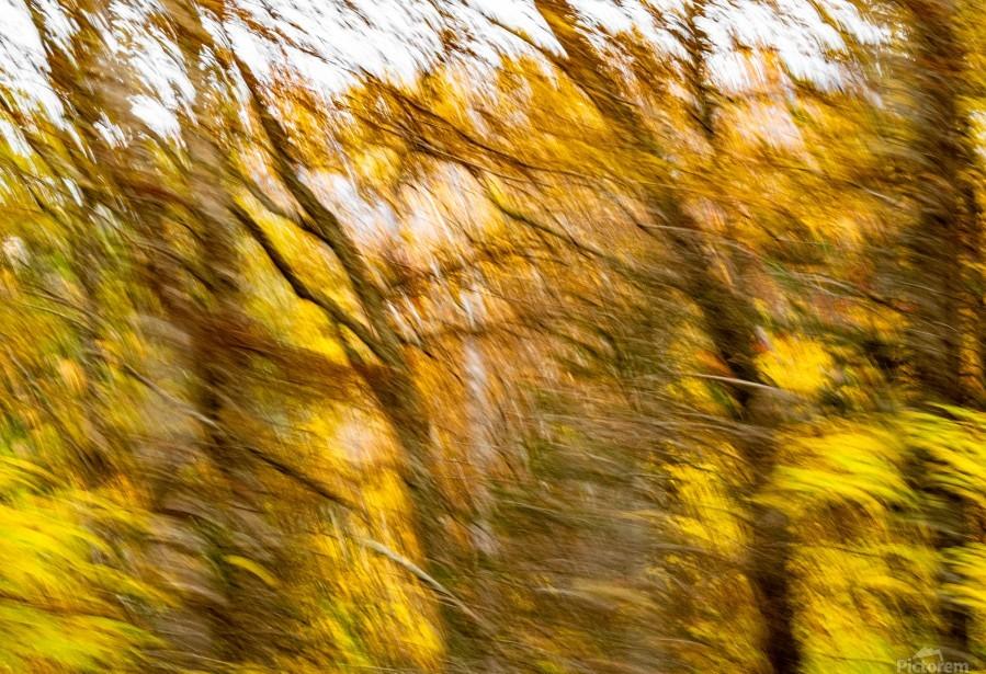 Foliage Blur  Print