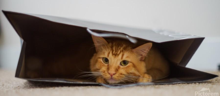 Cat In The Bag  Print