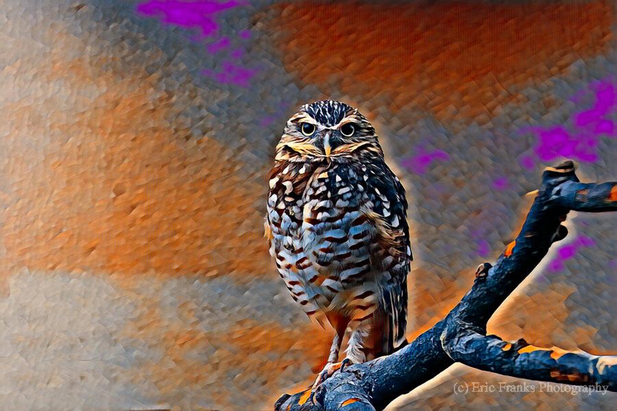 OWL - Stylized  Print
