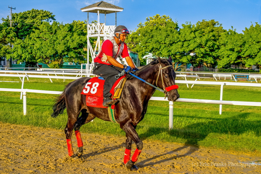 Racehorse01  Print