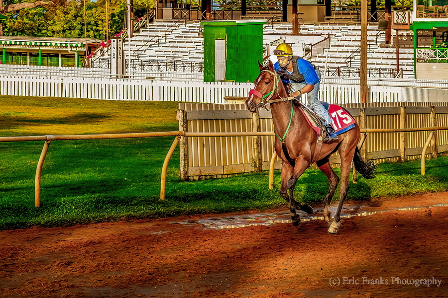 Racehorse02  Print
