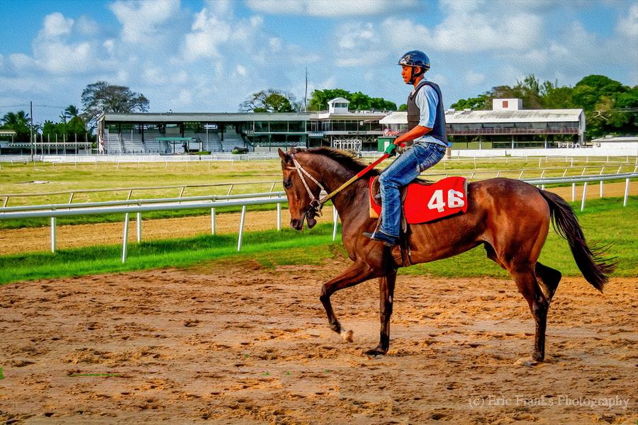Racehorse04  Print