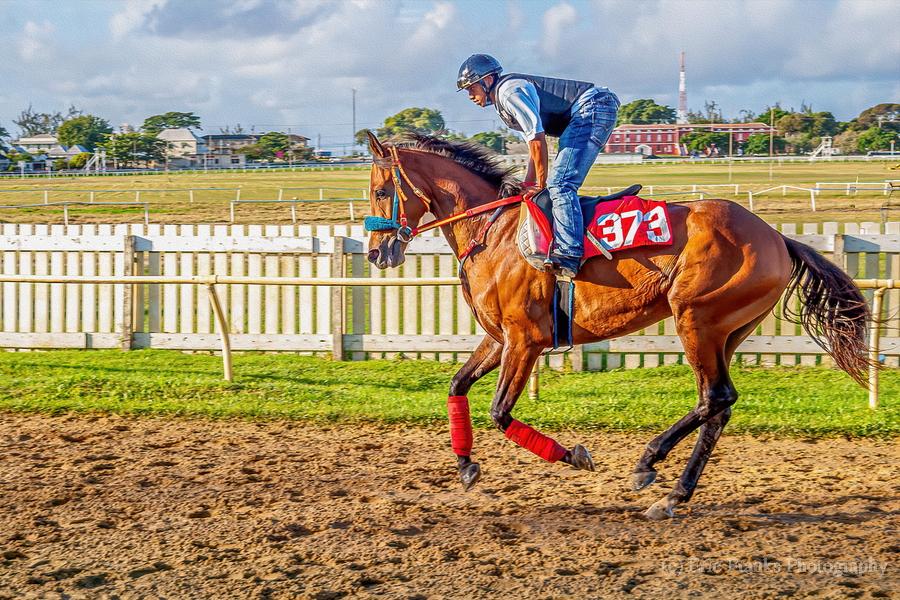 Racehorse06  Print