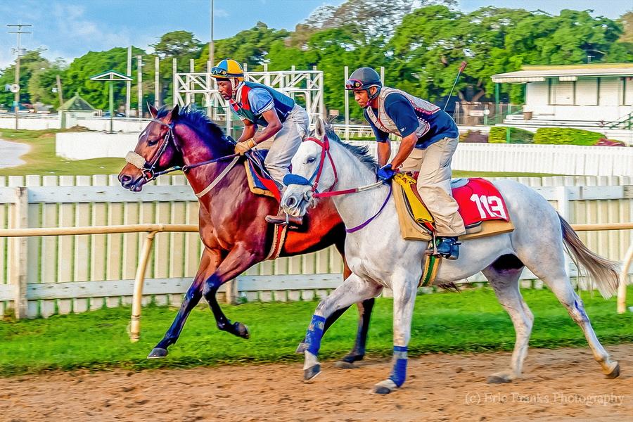 Racehorse08  Print