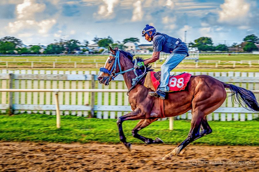 Racehorse09  Print