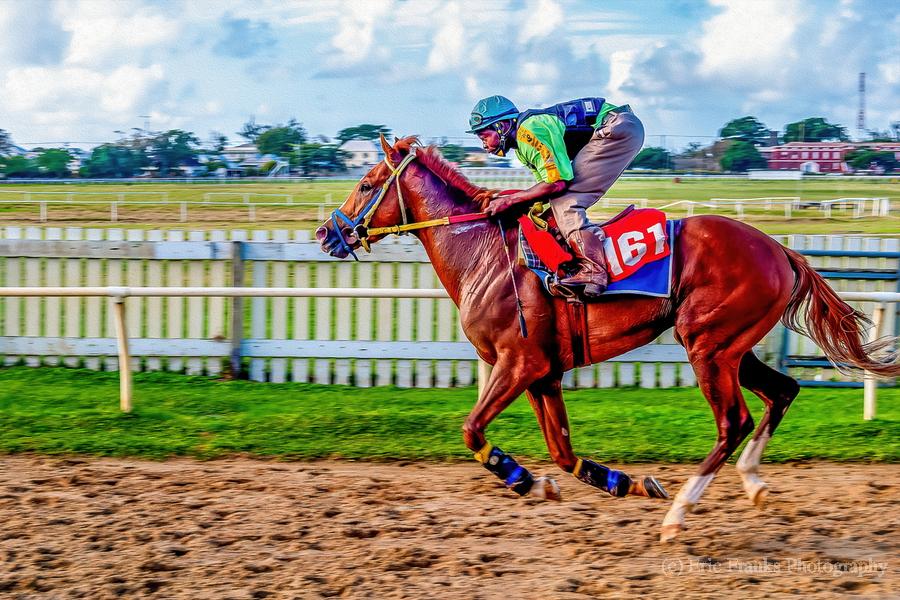 Racehorse10  Print