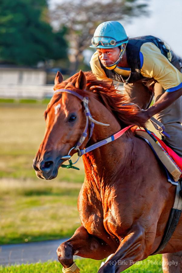 Racehorse11  Print