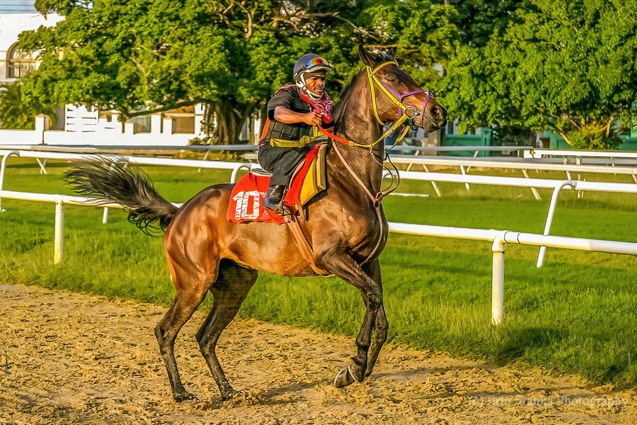 Racehorse12  Print