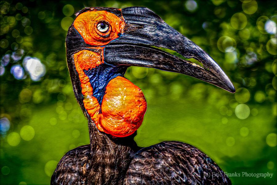 Ugly Bird  Print