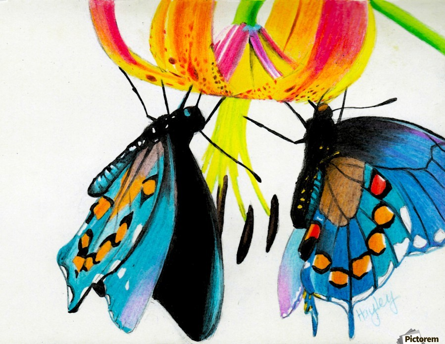 Butterflies and Lily  Print