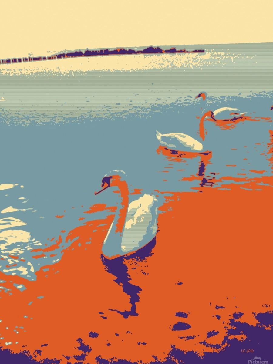 Swans  Print