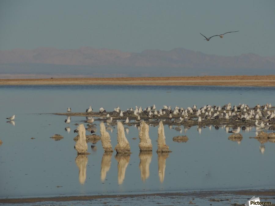 The Salton Sea  Print