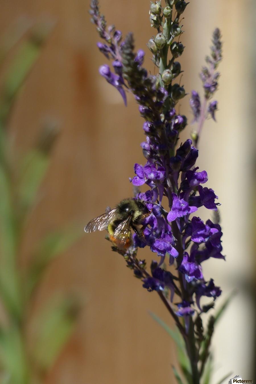 Bee Love  Print