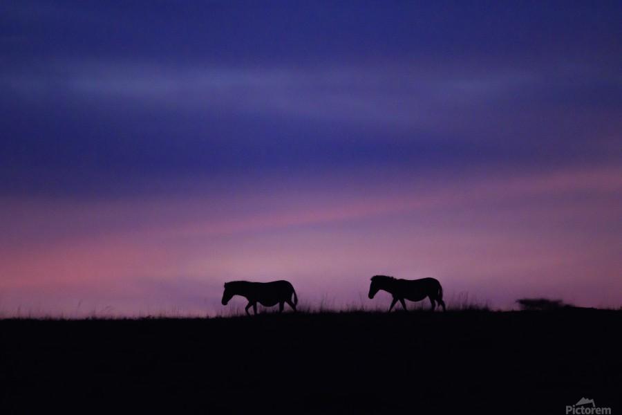 Zebra Sunrise  Print