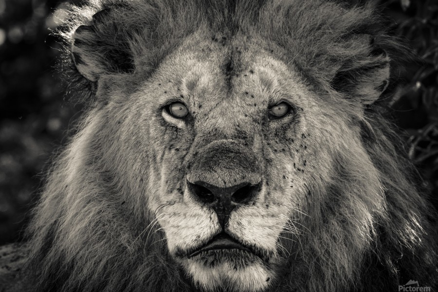 The King of South Africa - 1  Print
