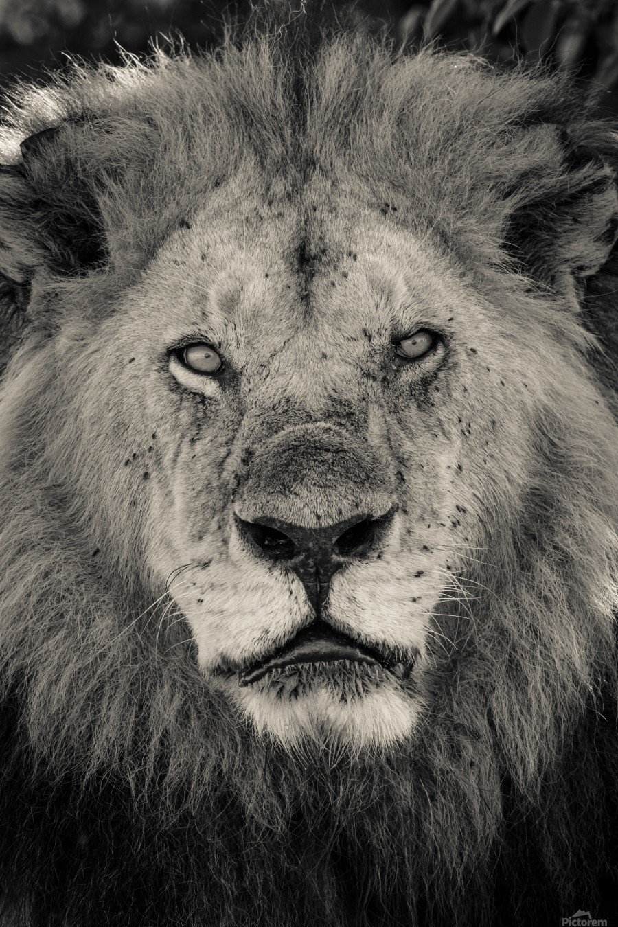 The King of South Africa - 2  Print