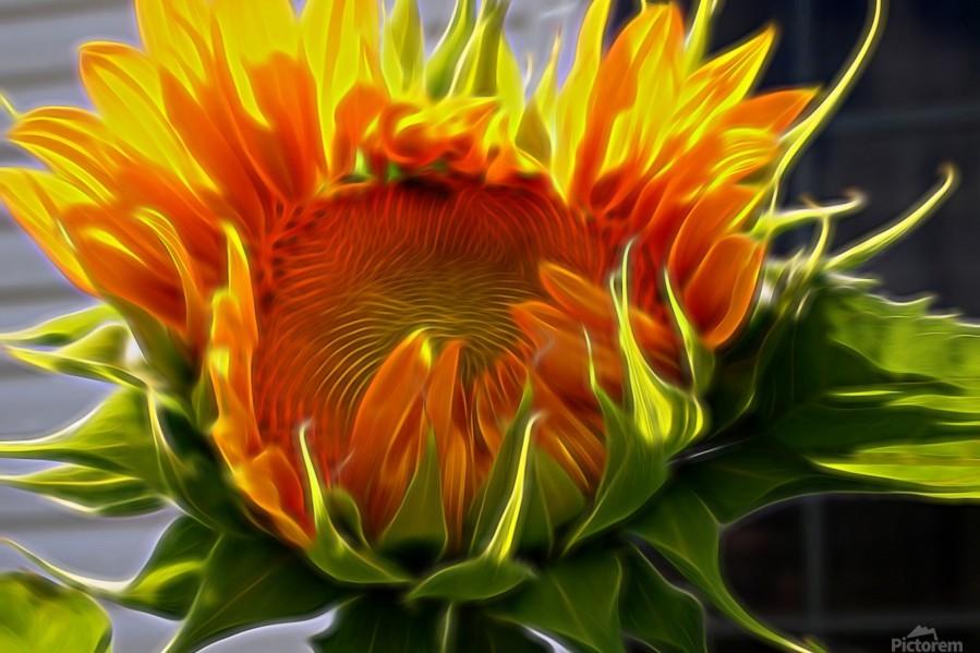 Glowing Sun  Print