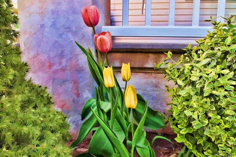 Painted Tulips  Print