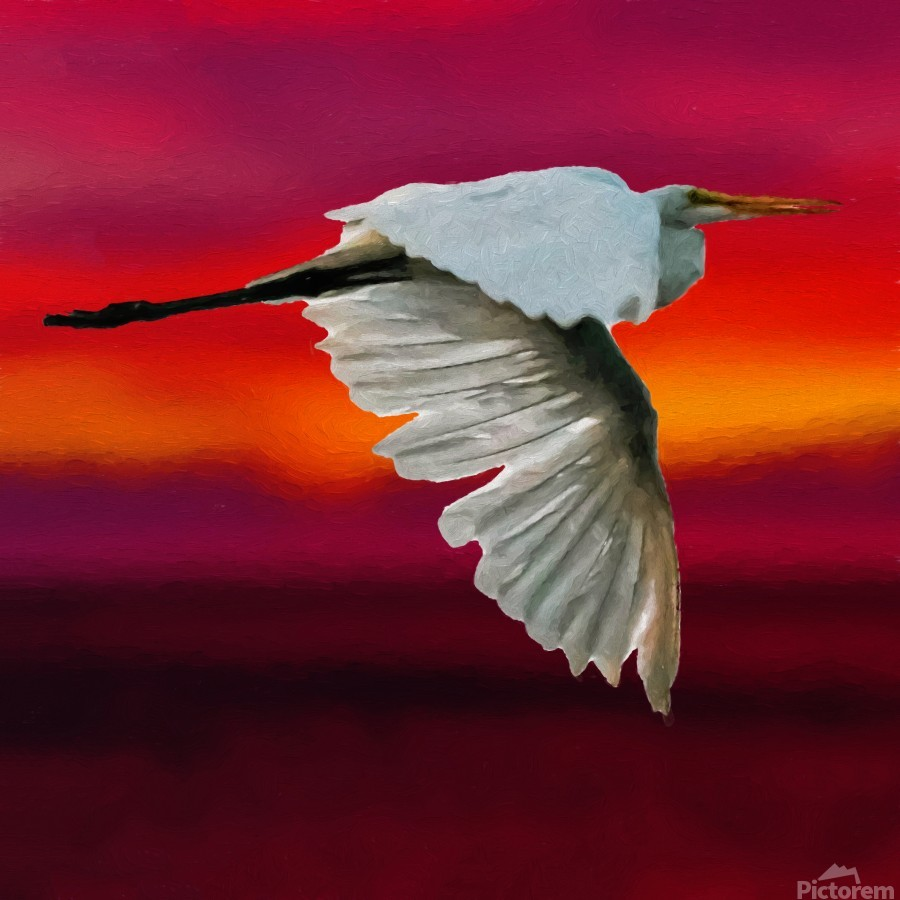 Egret in sunset  Print