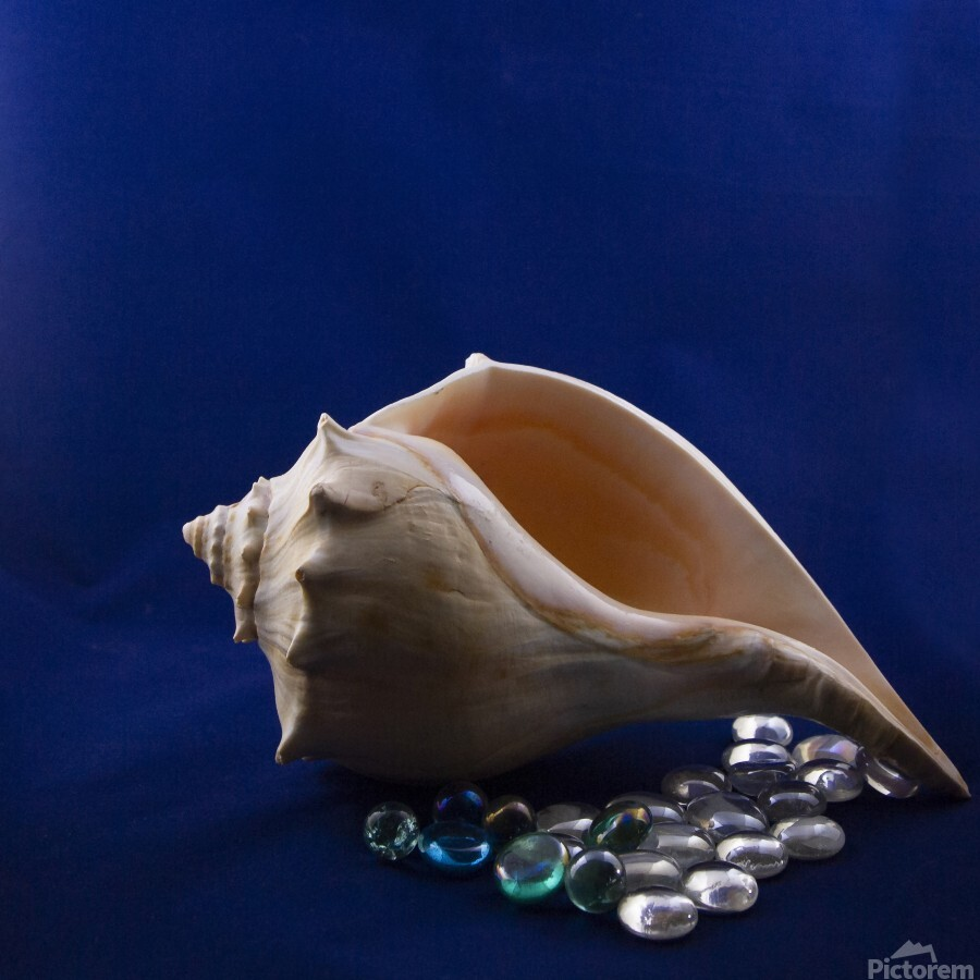 Single Conch Shell With Colored Glass   Print