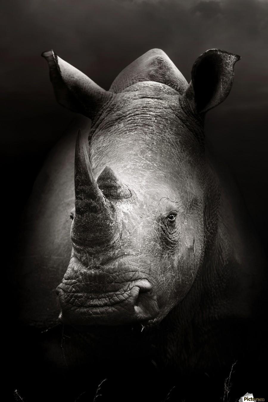 Rhinoceros portrait  Print
