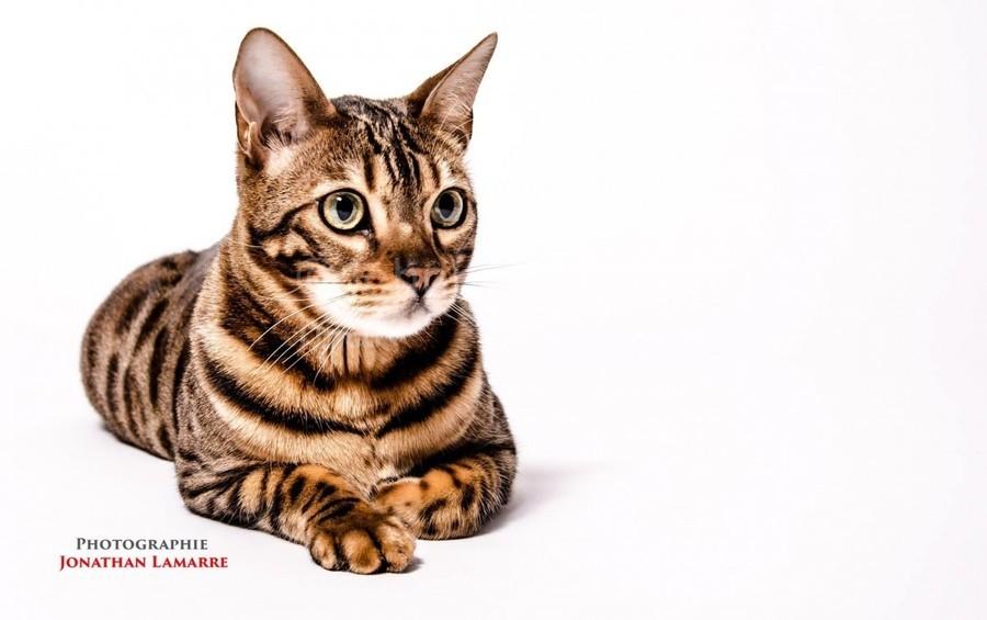 Cat life  Print