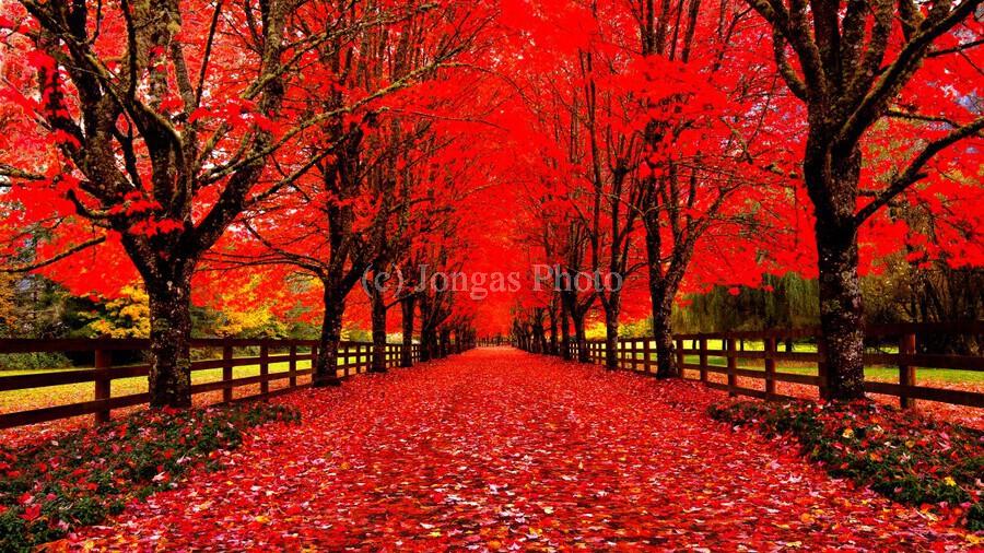 Red Carpet  Print
