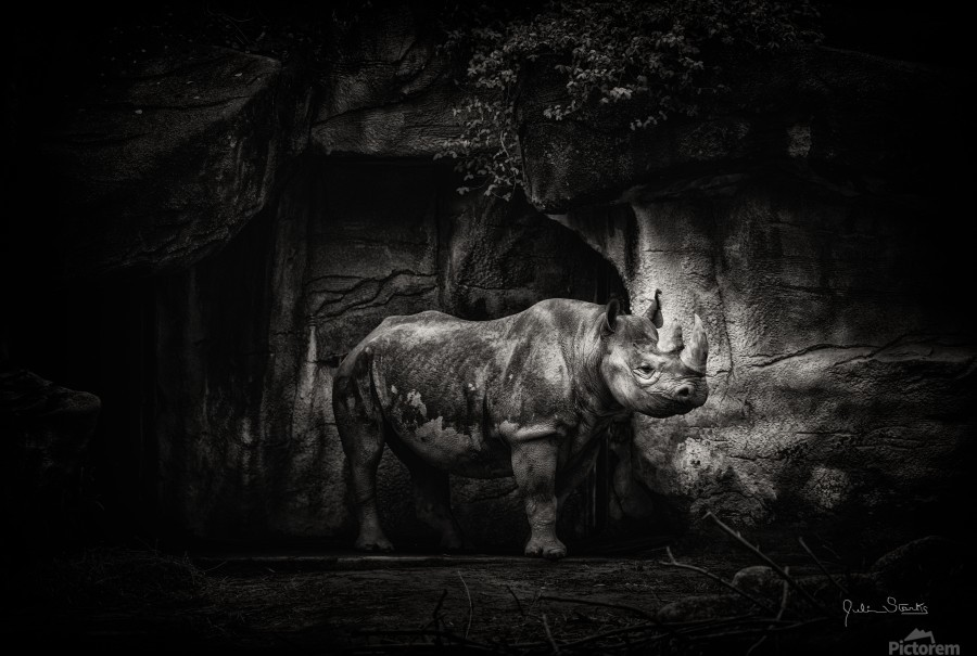 Rhino in Black & White  Print