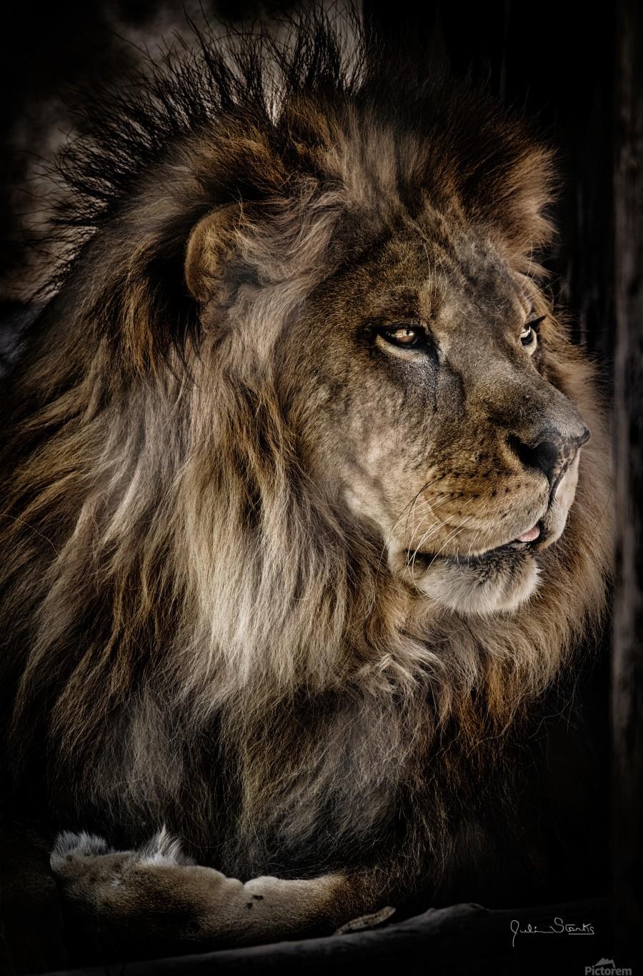 A Lions Profile  Print