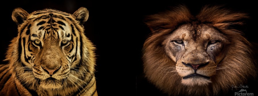 The Kings of Beasts - No Title  Print