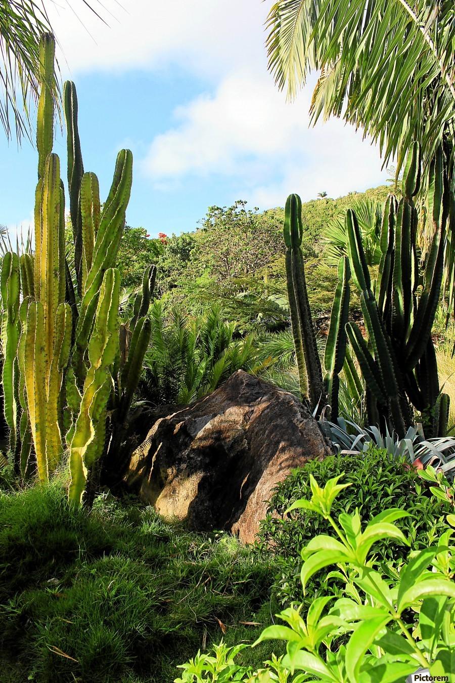 Nevis cactus  Print