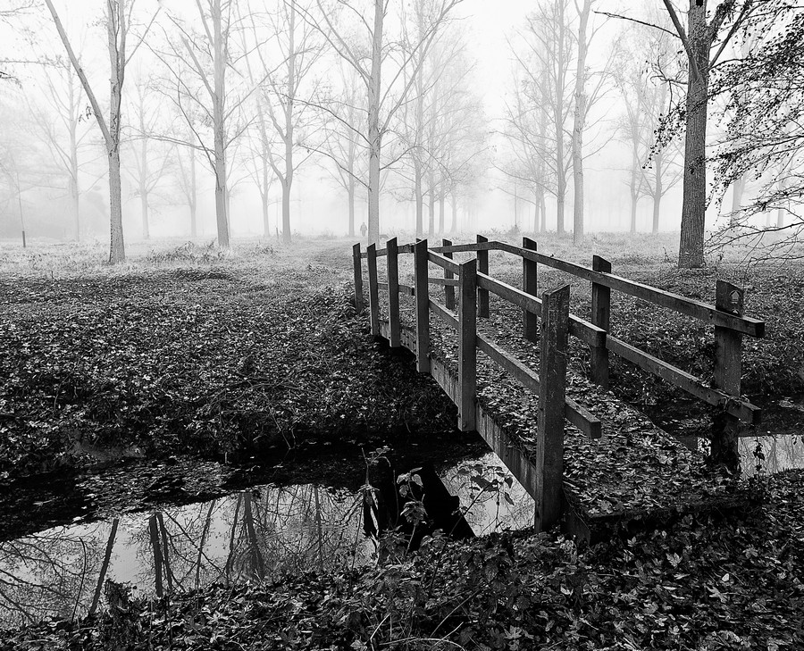 Misty Day  Print