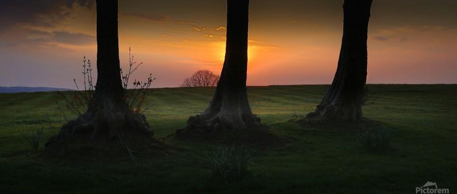 Tree trunks at Ravenhill park  Print