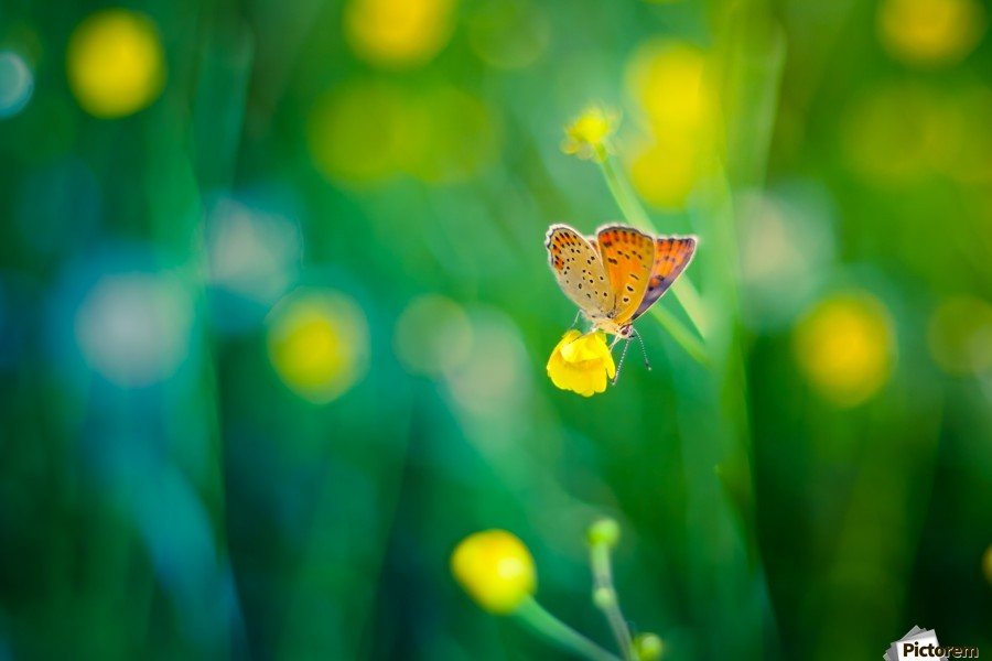Butterfly summer background  Print