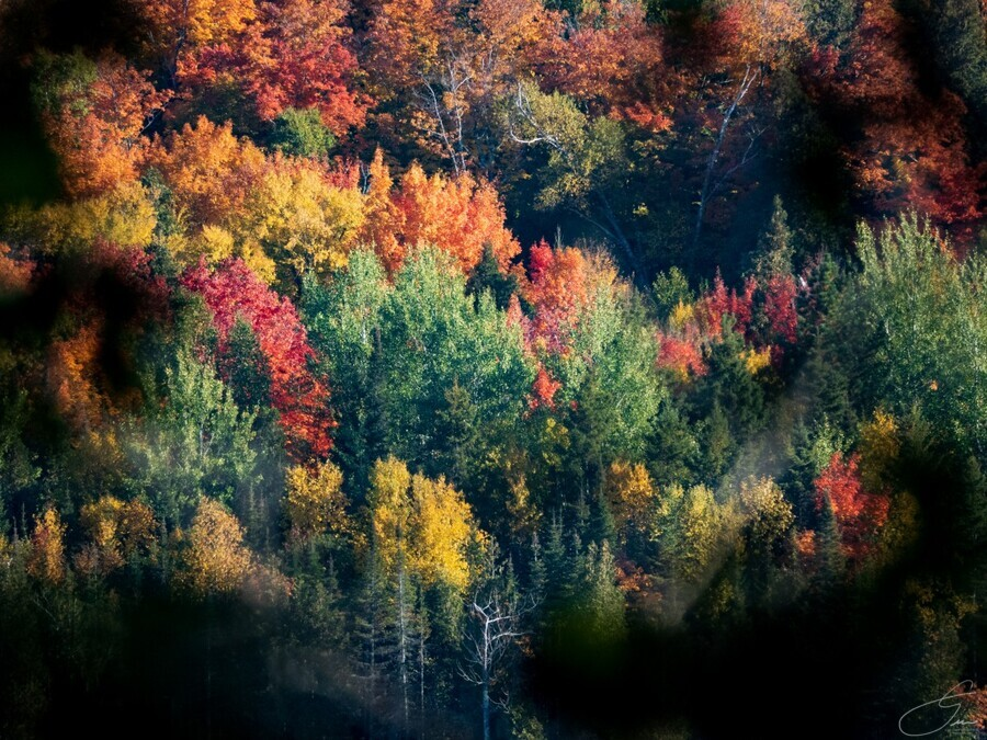 autumn abstract view  Print