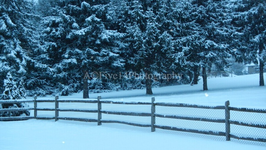 Winter Snow  Print