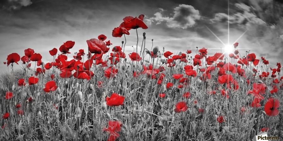 Idyllic Field of Poppies with Sun  Print