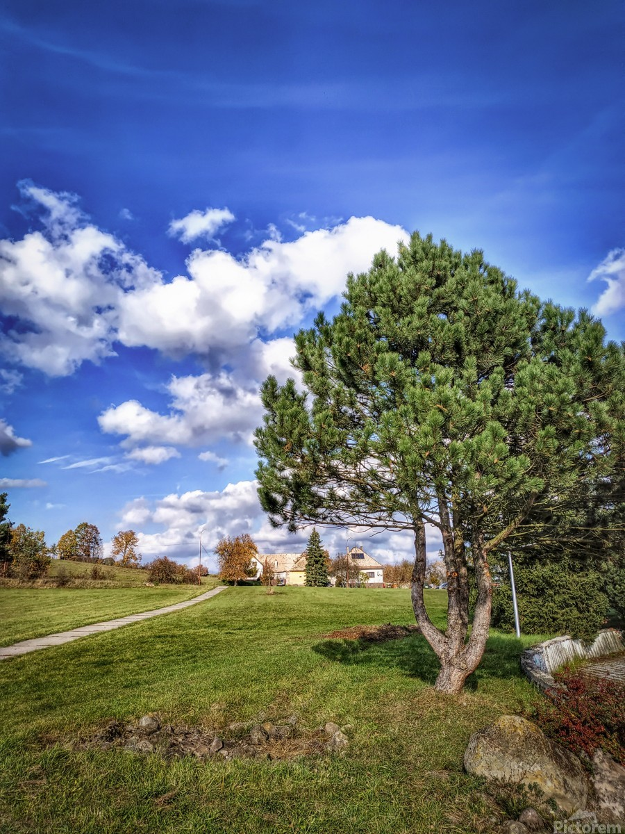Tree and blue sky with clouds  Print