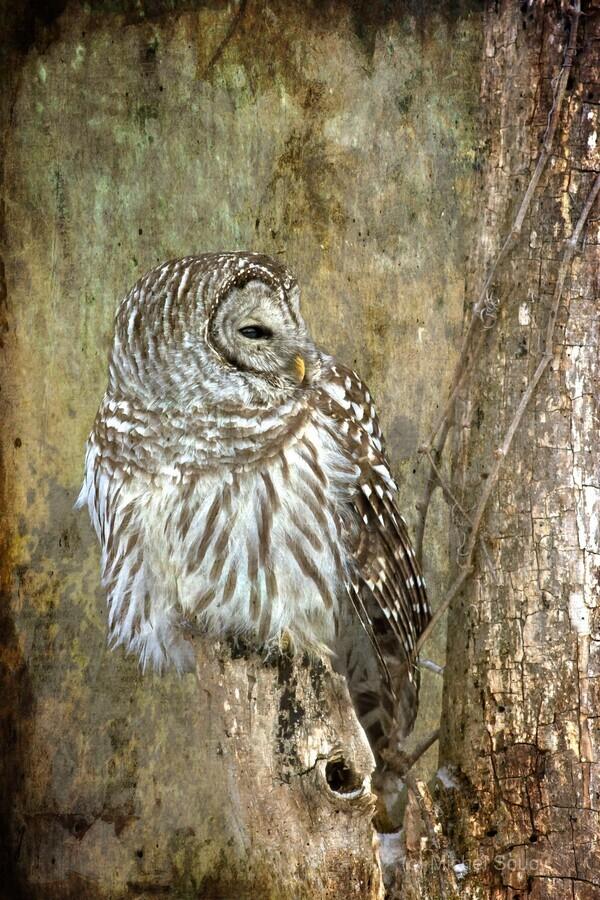 Grungy Owl  Print