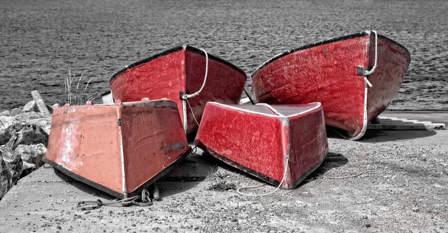 Red Dorries  Print